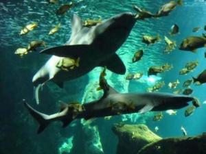 aquarium-de-la-rochelle-la-rochelle-1308855092