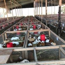 Guinea pig facility